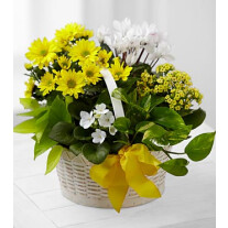 C22-4888 A Bit of Sunshine™ Basket by FTD®